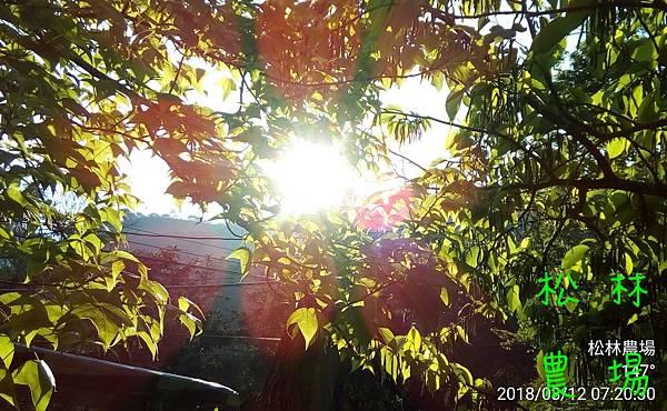 松林農場20180312_072030.jpg