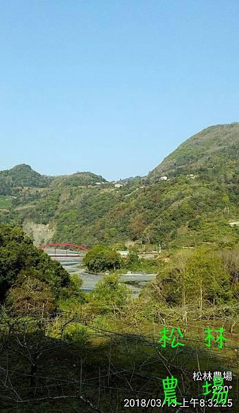 松林農場20180313甜柿區的景致