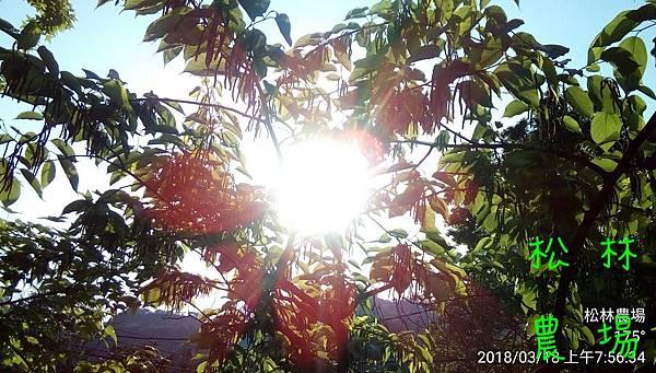 松林農場20180318_075634.jpg