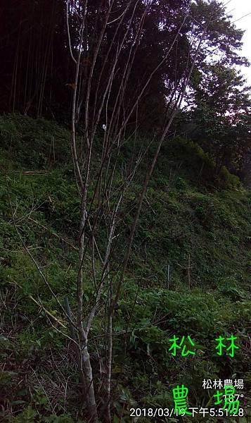 松林農場20180319_種8年的蘋果樹