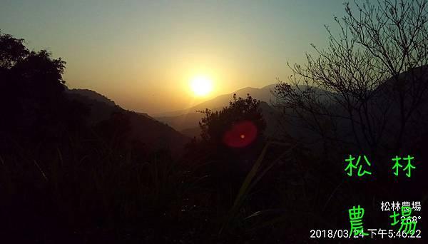 松林農場20180324_茶園夕陽
