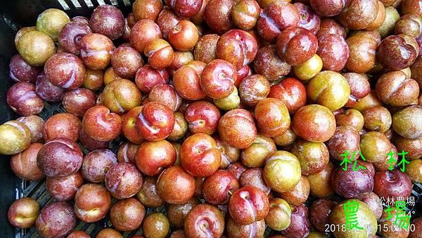 松林農場20180609_製作紅肉李酵素過程