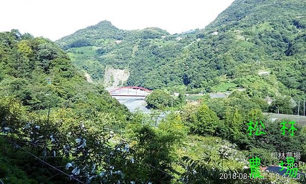 松林農場20180803_甜柿區
