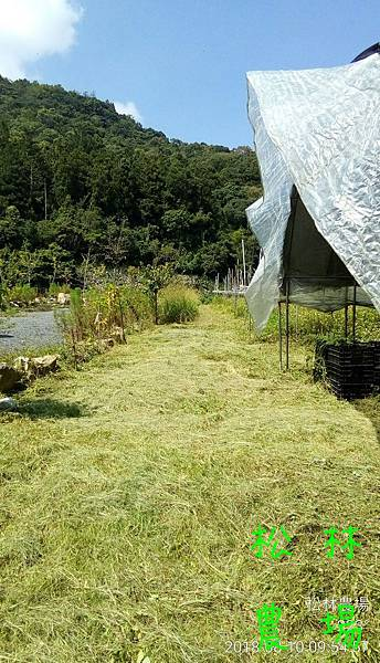 松林農場20180810農場本部砍草完成