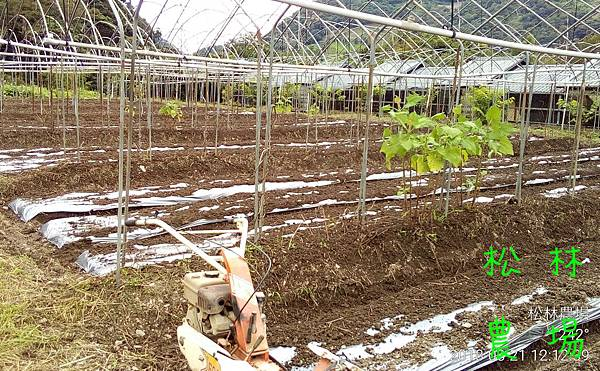 松林農場20180821_整地準備種節瓜