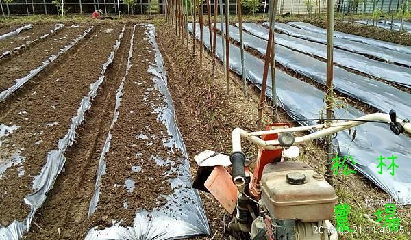 松林農場20180821整地準備種節瓜