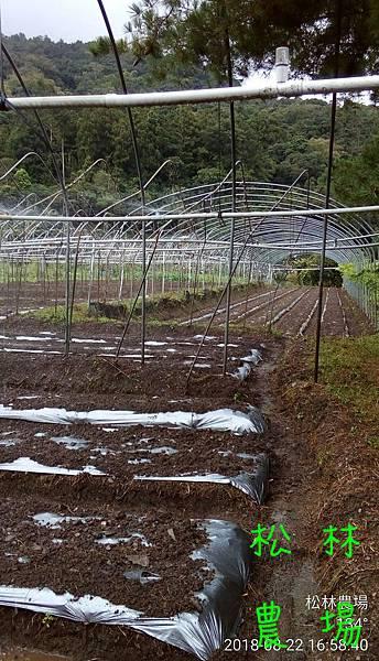 松林農場20180822_噴水完成
