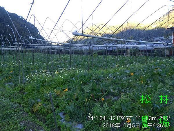松林農場20181005_063636.jpg