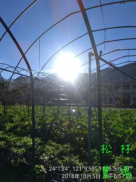 松林農場20181005_065723.jpg