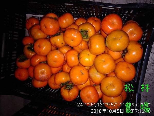松林農場20181005_甜柿