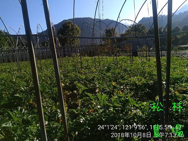 松林農場20181008採節瓜