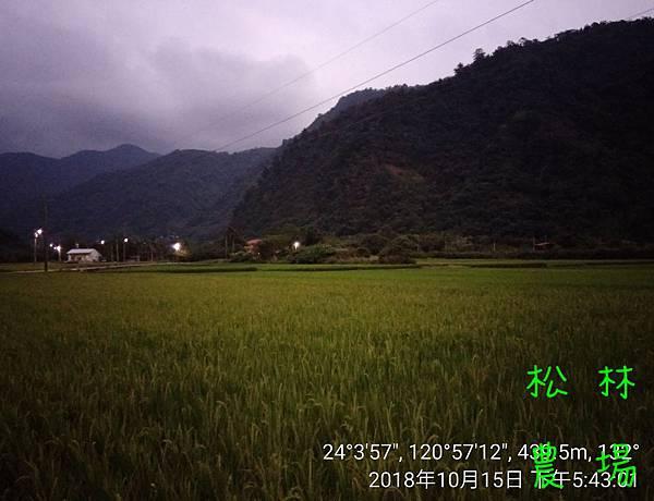 松林農場20181015到清流部落載苦茶籽
