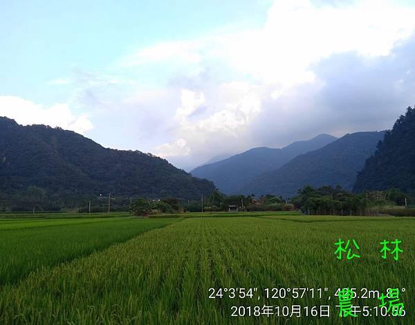 松林農場20181016清流部落的稻田