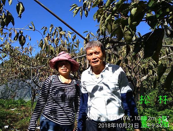 松林農場20181021增濱一行人幫忙採收甜柿