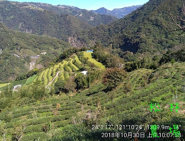 松林農場20181030_茶園