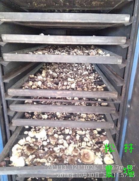 松林農場20181030_木頭香菇烘乾中