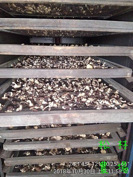 松林農場20181030木頭香菇烘乾中