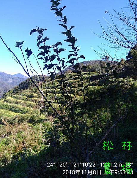 松林農場20181108_095823.jpg