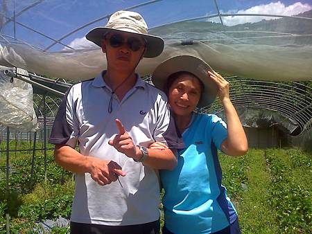 台南的李先生李太太農場採草莓