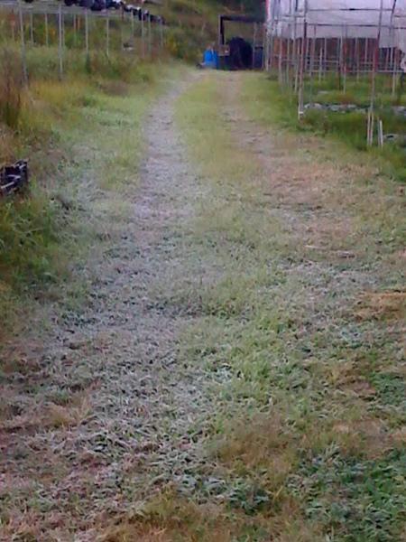 農場綠色走廊霜害
