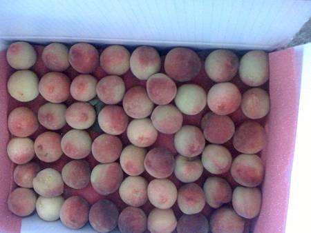 農場宅配的水蜜桃[6.5]