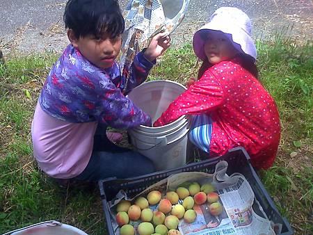 彥霆與婕熒幫忙採草莓