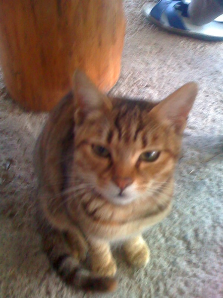 德魯灣 的小貓