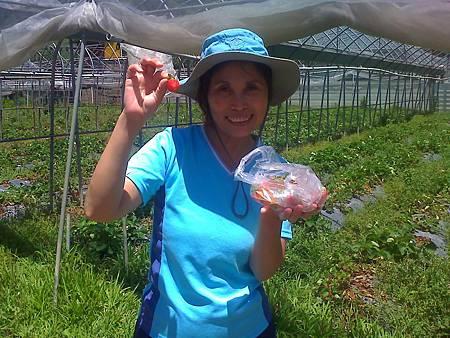 台南的李太太與無農藥草莓