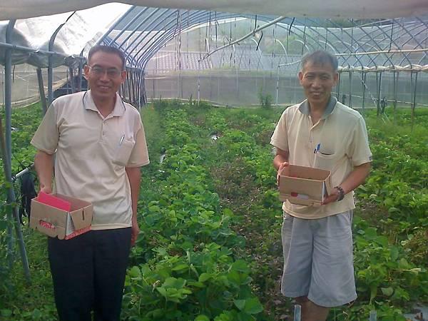 增濱的大哥與二哥農場採草莓