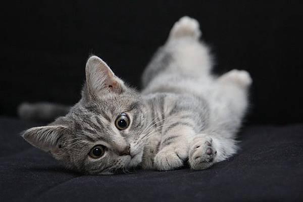 松裕堂-貓咪減肥法