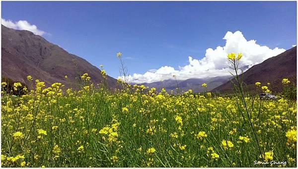 西藏。在天邊!《好福氣–世界神山日.慶德鄉望果節!》40