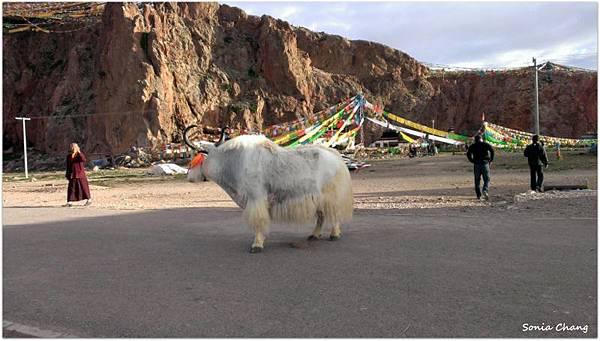 西藏。在天邊!《好福氣–世界神山日.慶德鄉望果節!》10