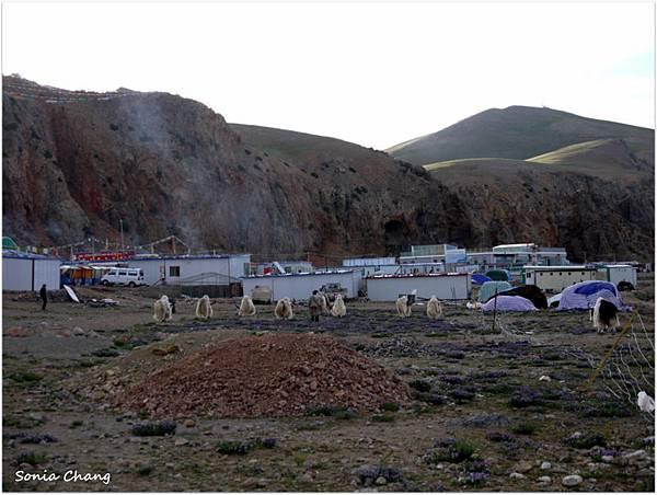 西藏。在天邊!《好福氣–世界神山日.慶德鄉望果節!》16
