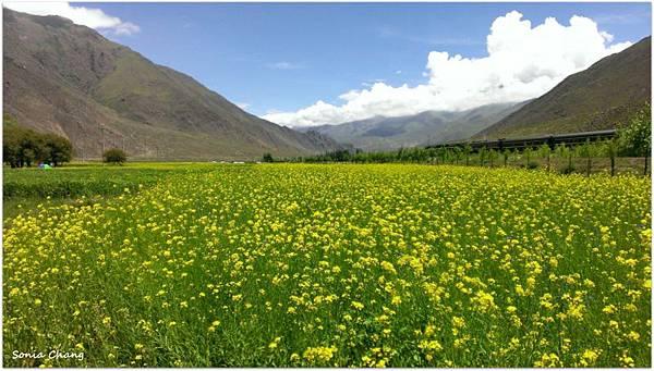 西藏。在天邊!《好福氣–世界神山日.慶德鄉望果節!》38