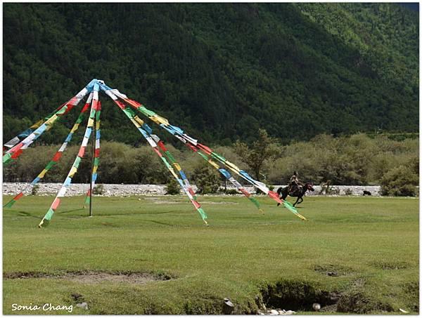 《珍貴甘霖–西藏.林芝!》10