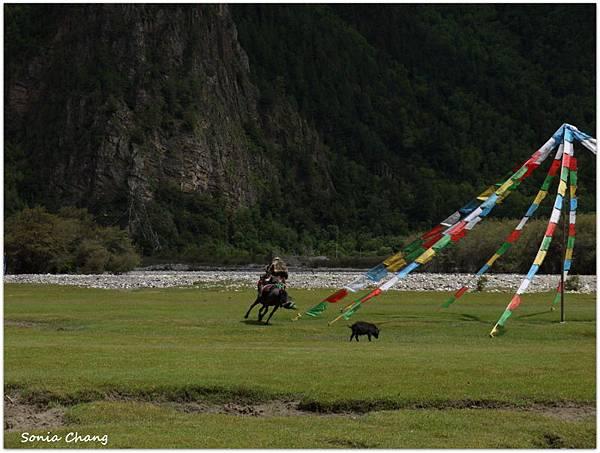 《珍貴甘霖–西藏.林芝!》09