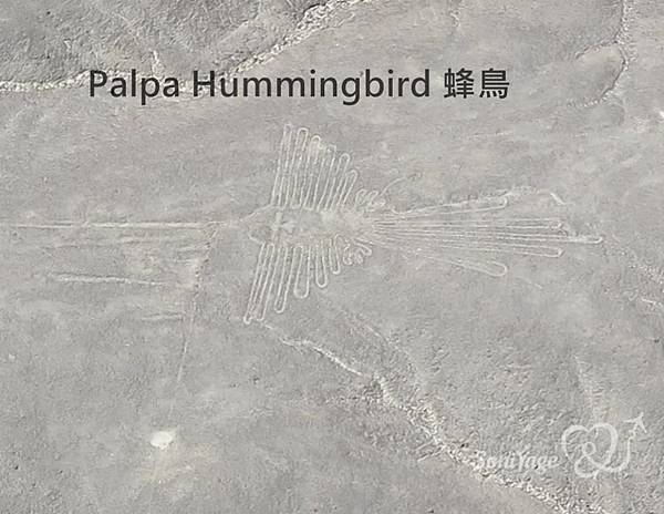 Nazca Lines,外星人帶不走的畫作!12.jpg