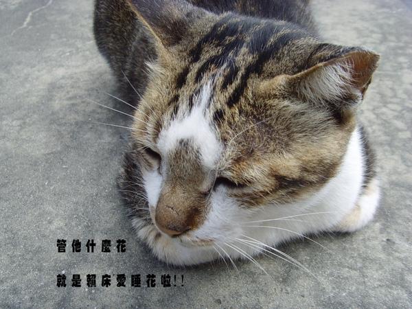 貓.JPG