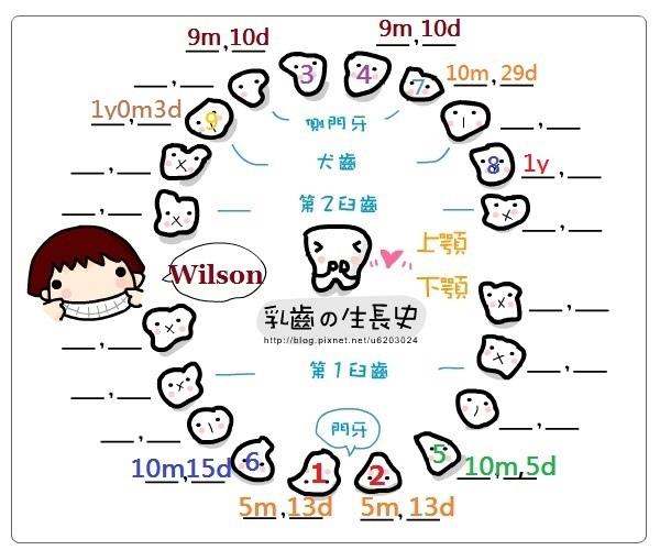 Wilson乳牙生長紀錄表(9號小白牙).jpg