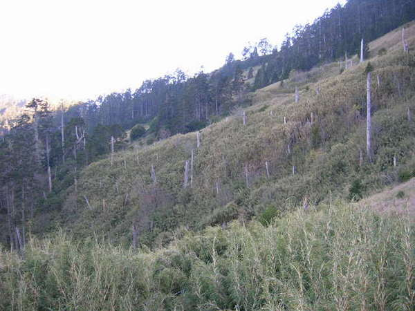 三六九山莊前的景色