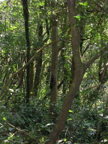 松鼠在樹上