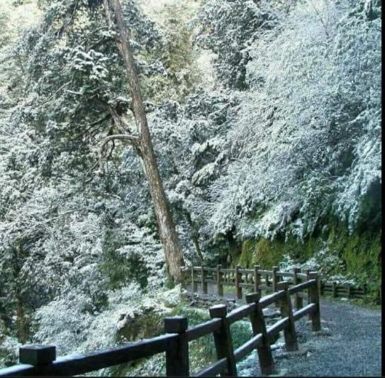 20160124 台中太平頭汴坑山區也下雪了
