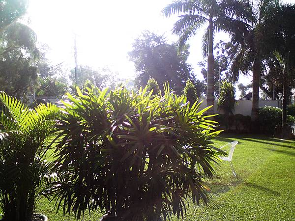 旅館的草地