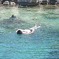 地中海水溫真冷