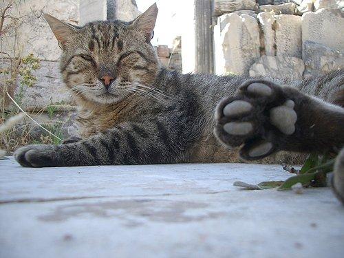 悠遊古蹟的貓. 土耳其