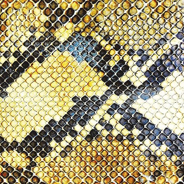 The Amazing Snakeheads -Amphetamine Ballads
