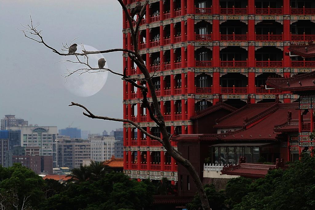 樹鳥7.jpg