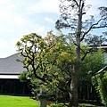 NZ_11.jpg