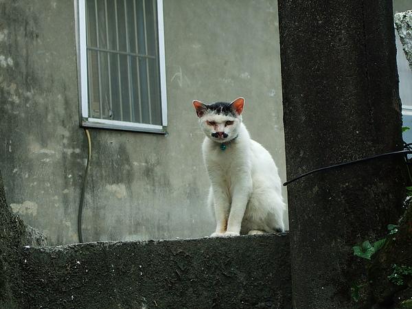 侯硐貓村。基隆廟口小吃