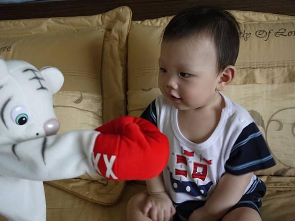 玩具-拳擊小白虎.JPG